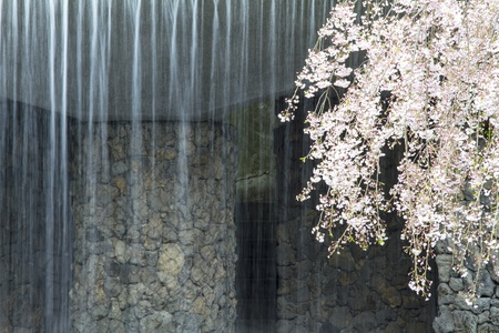 Nice pink sakura with water fall for adv or others purpose use photo