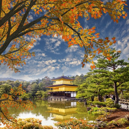 Peaceful Golden Pavilion Temple with maple in Kyoto, Japan