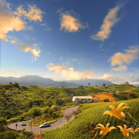 Daylily flower at sixty Stone Mount