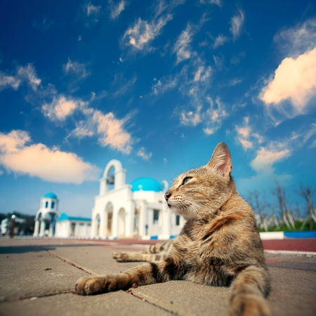 Blue and White Church bell with cat for adv or others purpose use Stock Photo