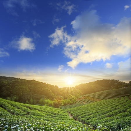 proposito: jardín de té para los adv u otros uso del propósito Foto de archivo
