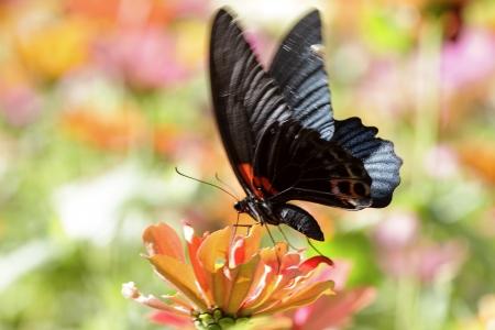 butterflies flying: farfalle che volano nel cosmo fiori