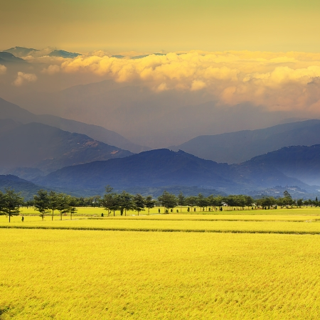 Beautiful paddy place for adv or others purpose use