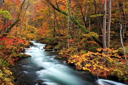 Autumn Colors of Oirase Stream at Aomori,Japan Stock Photo