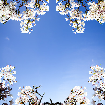 Beautiful sakura season