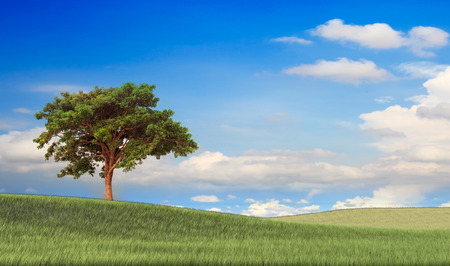 Field,tree and blue sky for adv or others purpose use Stock Photo