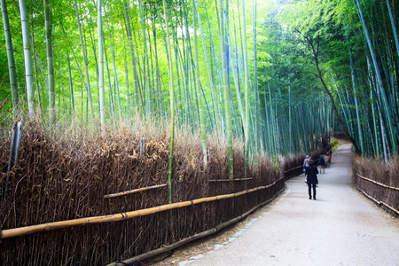 The bamboo forest of Kyoto, Japan for adv or others purpose use photo