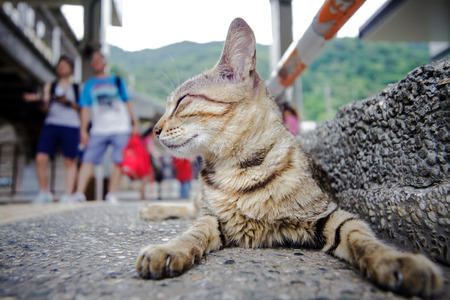 cat with nice background photo