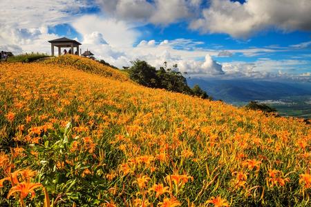 Daylily flower at sixty stone mountain, Taiwan Stock Photo