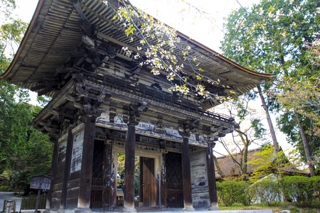 koyo: Old temple with nice sakura flower for adv or others purpose use