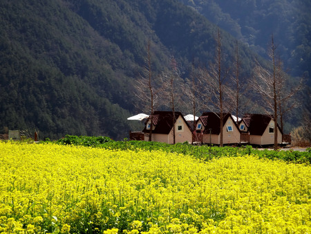 Beautiful flower Garden in Wuling Farm Taiwan for adv or others purpose use