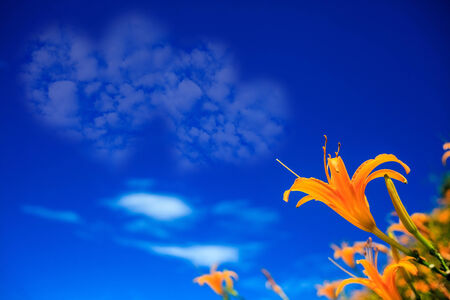 Picture of a a heart cloud on blue sky for adv or others purpose use photo