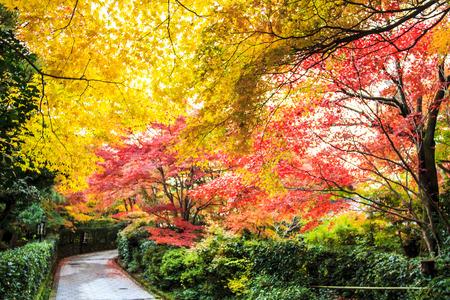 Aceri rossi in un giardino giapponese Archivio Fotografico - 32043317