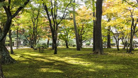 Kotoji Lantern in Kenrokuen garden has two legs, which resemble Kotoji, the bridge on a Koto. - Kanazawa , Japan