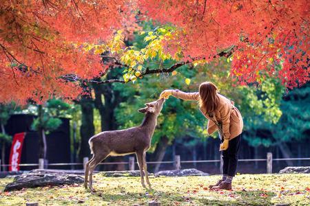 Nara deer roam free in Nara Park, Japan for adv or others purpose use