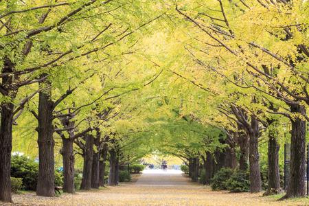 showa: Showa Memorial Park in Tachikawa, Japan