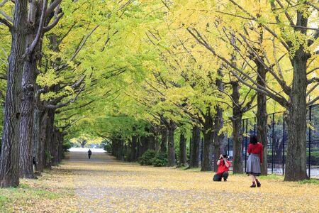 showa: Showa Memorial Park Tachikawa, Japan