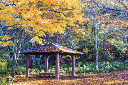 fujigoko: Mt. Fuji with fall colors in japan for adv or others purpose use Stock Photo
