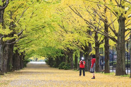 showa: Showa Memorial Park for adv or others purpose use Stock Photo