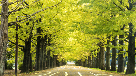 upcoming: Driving on an road towards to upcoming 2016 and leaving behind old 2015