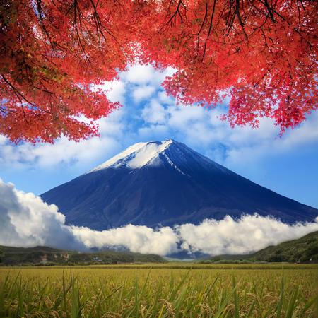 koyo: image of fuji mountain, Japam Stock Photo