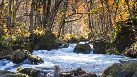 The Mysterious Oirase Stream flowing through the autumn forest in Towada Hachimantai National Park in Aomori Japan