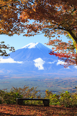 fujisan: The fall season of Mt. Fuji in Japan with nice yellow color Stock Photo