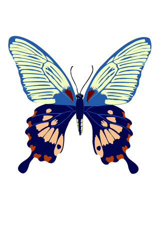 north american butterflies: The Butterfly with open wings in a top view as a flying migratory insect butterflies