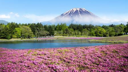 芝桜祭では、山梨県のピンクのコケのフィールドと富士 写真素材