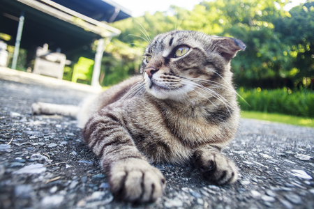 and is favorable: The cat laying on the road with nice background color Stock Photo