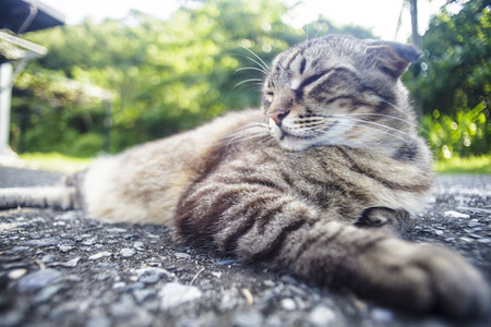 street wise: The cat laying on the road with nice background color Stock Photo