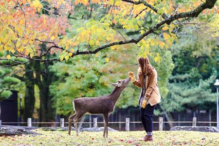 Das Reh von Nara an der Herbstsaison, Nara Japan Standard-Bild - 83469143
