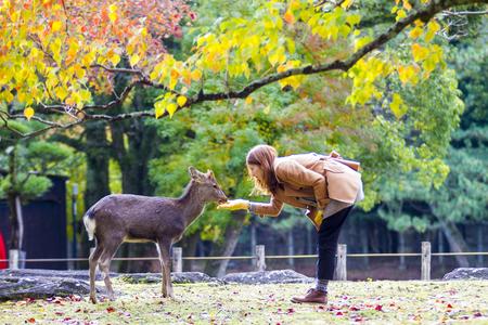 나라 공원, 일본에서 아름다운 단풍 나무가있는 가을 계절