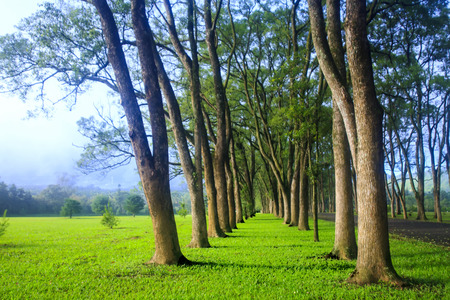 sequoia: The green road with forg in the morning, Taiwan Stock Photo