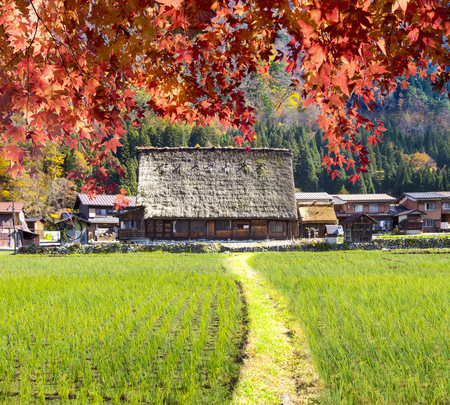 The fall season of Historic Villages of Shirakawa-go and Gokayama, Japan