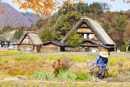 gokayama: The fall season of Historic Villages of Shirakawa-go and Gokayama, Japan