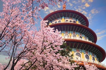 The beautiflu sakura garden with nice sky in Taipei, Taiwan Reklamní fotografie - 84694297