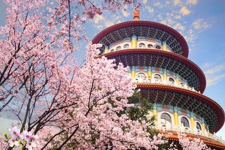 El hermoso jardín de Sakura con un bonito cielo en Taipei, Taiwán