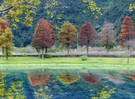 The Classic bald cypress scene of the Taiwan