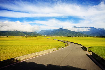 Rural scenery with golden paddy rice farm at Luye, Taitung, Taiwan