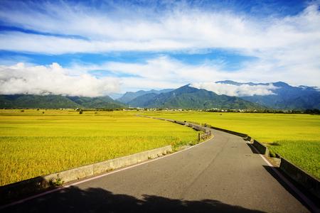 Rural scenery with golden paddy rice farm at Luye, Taitung, Taiwan 免版税图像 - 115603035