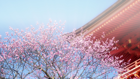 KYOTO, JAPAN - MARCH 36, 2015: Tourist at Kiyomizu-dera temple during cherry blossom time are going to bloom in Kyoto, Japan