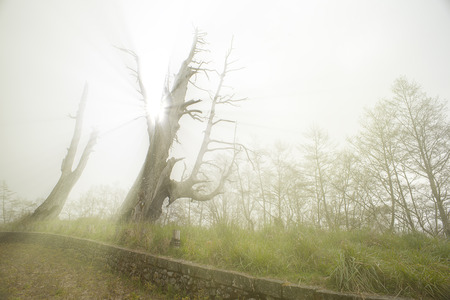 The two old tree stand look like couple for a long time it locate on Taiwan