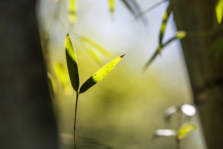 The Growing bamboo border design over blurred sunny background