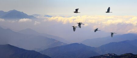 The Foggy morning in the mountains with flying birds over silhouettes of hills