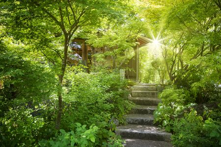 The nice lighting with green leaf and small road to the house Stock Photo