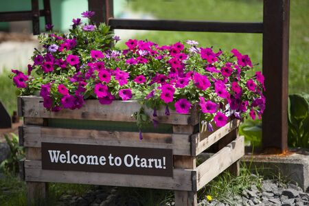 The nice flower beside the street with a nameplate show welcome to Otaru Standard-Bild
