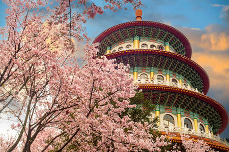 The Sakura cherry blossom at Tianyuan temple, Taipei, Taiwan Banque d'images
