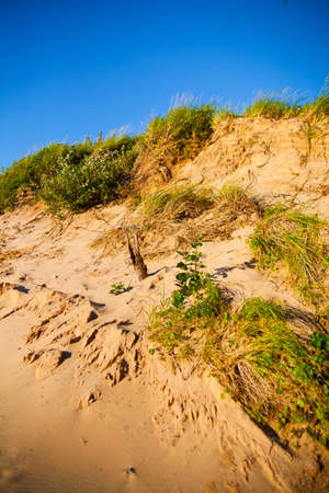 Green and brown scrub brush on a sloping sand dune