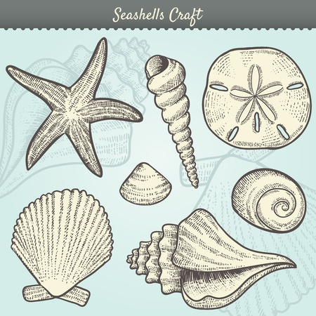 sand dollar: Illustration of various sea shells doodled in a vintage style.